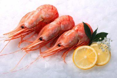 krevetka-grebenchataya-botan-sredniy