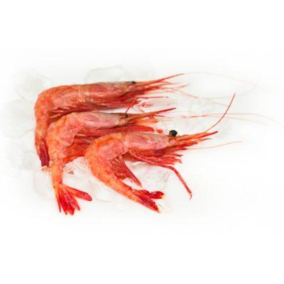krevetka-uglohvostaya-krab125